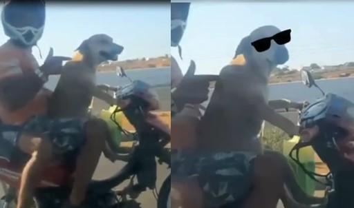 Ce chien conduit la moto de son maître alors qu'ils sont sur la route !