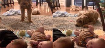 Ce chien voulait tellement jouer avec ces jumeaux, malheureusement, ces bébés n'ont rien compris