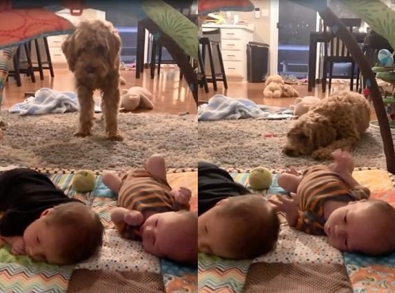 Ce chien voulait tellement jouer avec ces jumeaux, malheureusement, les bébés n'avaient pas compris