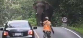 Inde : une voiture peine à traverser la route à cause d'un éléphant qui se promène en pleine rue, et qui zigzag en plus !