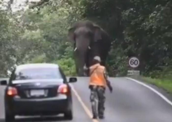 une voiture peine à traverser la route à cause d'un éléphant qui se promène en pleine rue, et qui zigzag en plus !