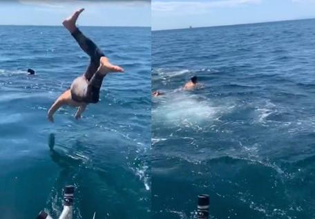 Ce jeune homme s'est mis en danger en plongeant dans l'eau en pensant voir un requin pèlerin alors qu'il s'agissait d'un requin blanc !