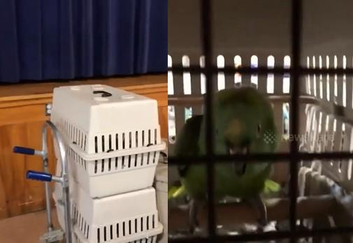 Ce perroquet pleure comme un bébé pour attirer l'attention