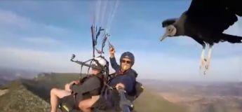 Ces deux hommes ont rencontré un vautour lors d'un vol en parapente