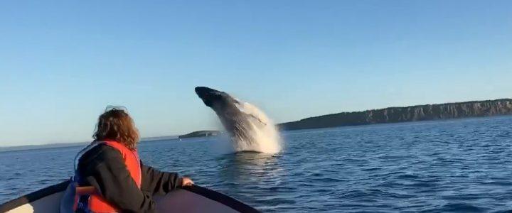 Cette famille a eu droit à un beau spectacle de sauts de baleines à bosse juste devant leur bateau