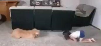 Cette petite fille s'amuse à faire de la gymnastique avec son chien, et leur prestation est très réussie