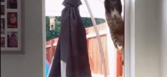 Ce chat le moins habile au monde essaye de rentrer ridiculeusement dans une maison qui n'est pas la sienne