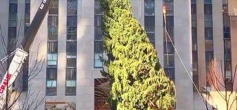 2020 : même le sapin de Noël du Rockefeller Center ne souhaite pas le fêter