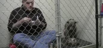 Ce vétérinaire parvient à faire manger un chien battu grâce à une technique assez atypique