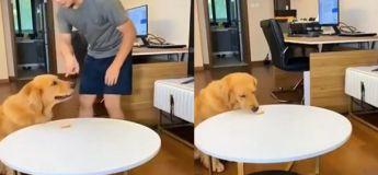 Ce chien est très malin, il réussit à tromper son maitre en faisant semblant d'être sage et obtient deux friandises