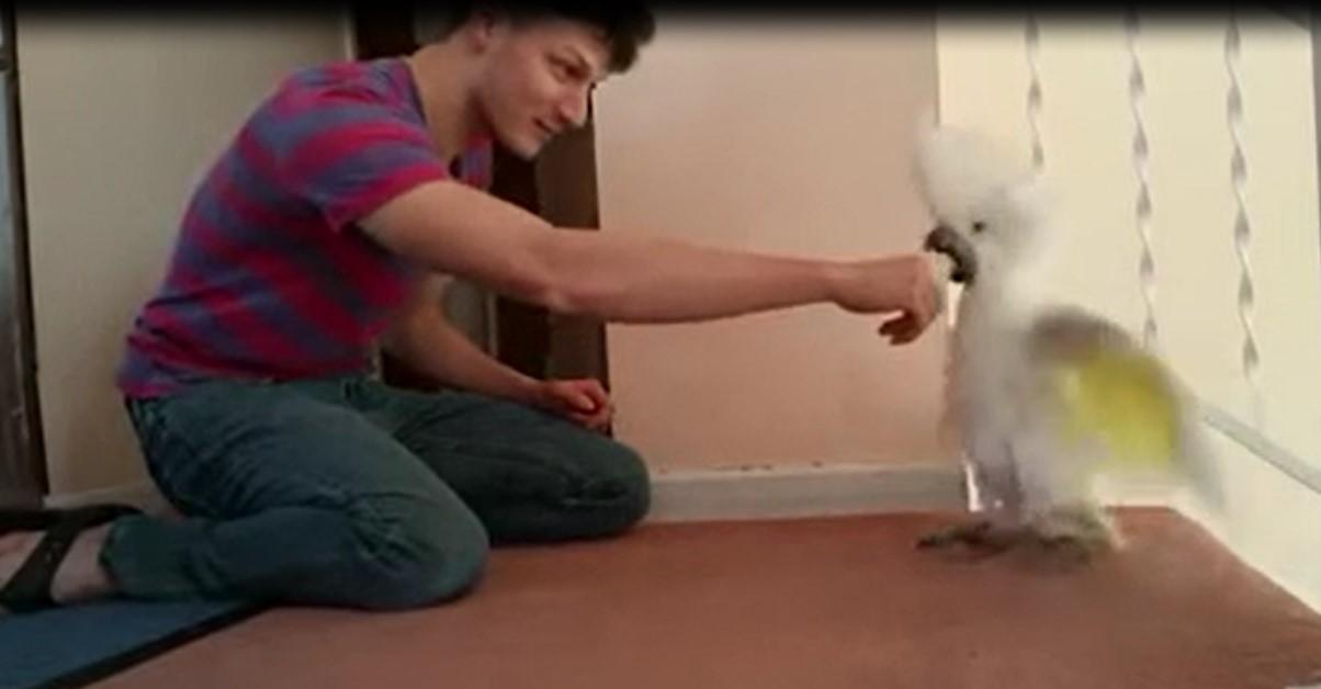 Cet homme s'amuse avec son perroquet, il lui fait croire qu'il a pris son nez