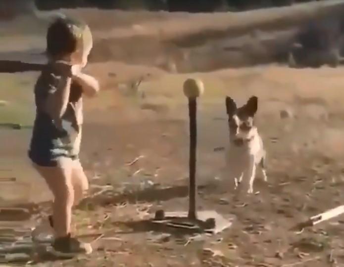 Regardez ce tout petit garçon qui s'amuse avec son chien, ils sont trop mignons