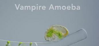 Terrifiant de voir ce micro-organisme dévorer une cellule en vidéo