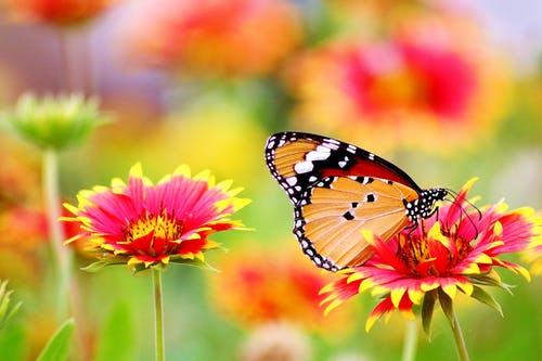 Allergie aux pollens: comment survivre durant la forte chaleur