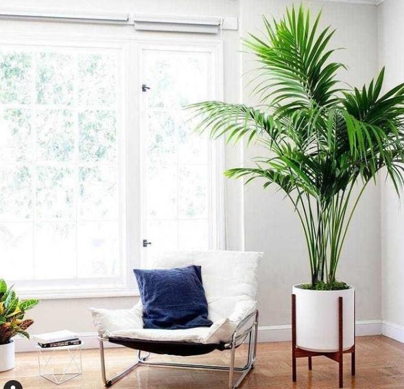 Quelle plante d'intérieur choisir